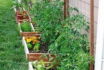 zeleninová zahrada / zahrada