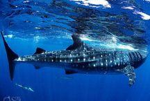 Ocean / Fantastic adventures scuba diving in the Riviera Maya