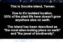 ~Socotra island~