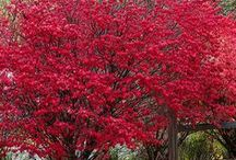 Landscape Essentials / Shrubs, bushes essential for beautiful and functional landscape