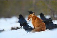 Fox & Co. / Lis i Spółka