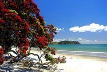 Waiheke Island, Auckland, Nieuw zeeland