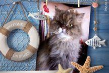 I miei gatti / Matisse, mio compagno per 16 anni; il piccolo sfortunato Chizuru e gli attuali Merlino e Morgana