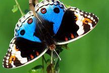 Butterflies / Farfalle nella natura e nell'arte