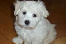 Cutie Pies / OwO