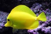 Under water creatures