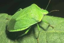Gardening - insects, animals and soils