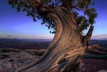 trees / by Laetitia la Grange