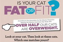 Healthy Weight for Pets / Ideas and products that can help your pet lose weight or maintain a healthy weight