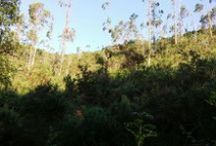 Alrededores (Río Cabra y manzanos) / Ver zonas cercanas al hotel, incluyendo nuestros campos de manzanos y el paso del Río Cabra