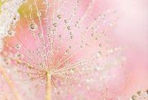 Or rose / Une sélection de montres et bijoux pour femme en or rose, la tendance du moment.