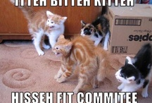 cute kitties / Dogs have masters - Cats have servants .........