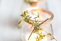 photophores  & bougies