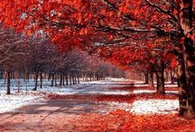 Nature @ it's Best (A+W) / Autumn & Winter / by Nando Djurović