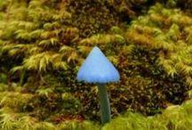 fungi *......
