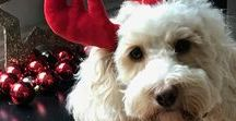 Baxter & Pickle's Christmas List 2017 / This is Baxter and Pickle's Christmas list. Follow this board so that you can find fabulous gift ideas for your dogs.