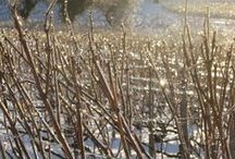 Hiver / Winter in Champagne / by Champagne