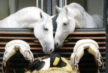 horses~