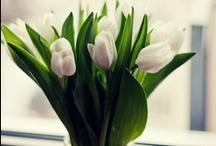 Nasze kwiaty / Własnoręcznie układane bukiety.