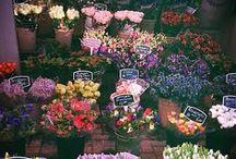 nature || flowers