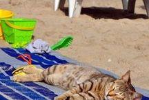 =^..^=   Beach ♥ Cats  =^..^=