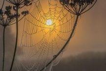 SpiDerS *web