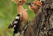 Birds & Forest