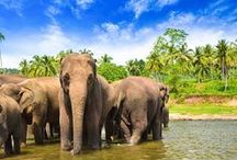 Unforgettable Sri Lanka / How about a visit to the stunning Sri Lanka? You'll never get bored there! Since there are so many cool places and activities to take part of, we thought we'd help you out a bit.