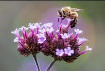 Bee Friendly - Bee Protect / http://blog.nurturenatureproject.com / by Nurture Nature Project