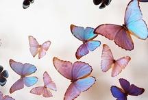 butterflies  / by 深江 / fukae