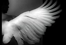 wings & feather / by 深江 / fukae