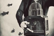 birdcage / by 深江 / fukae