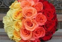 ~ Roses ~ / by Dawn Roberti