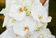~ Orchids ~