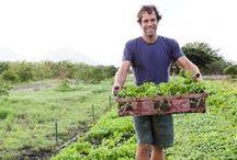 Organic Farm -> Good Earth