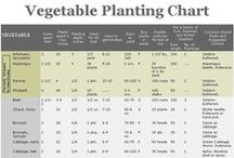 Organic Garden: Planning / by Nurture Nature Project