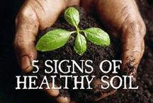 Organic, Nutrient-Rich Soil / by Nurture Nature Project