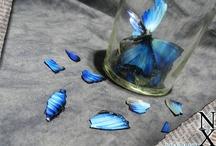 Motif of butterflies & moths / art,print, illustration,accessories,etc etc ... / by 深江 / fukae