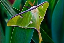 moths & insects / by 深江 / fukae