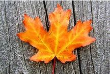 Fall into Fall / Easy recipes for Fall, pumpkin spice this and that, Fall decorating ideas and more!