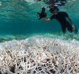 Climate & Ocean Acidification +