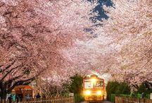 Beautiful Korea