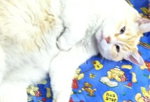 Casper (Lazy Bookstore Cat) and friends / Casper is the resident cat, owner, mascot & face of The BOOKWORM.