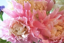 *•✿Peonies Please / I love peonies! My favorite flower because they are casual and feminine.  / by Southern Charm Wreaths