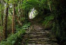 Irlandia, Szkocja, Anglia