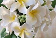 Natural2 / ClayArtDesigner Misa*claydesign.jp*~クレイで笑顔の花を咲かせたい~ ウェディング装飾/結婚式場装飾/ウェディングデコレーション/撮影レンタル&スタイリング/アニバーサリーギフト製作/店舗ウィンドウ装飾/イベント装飾/ウェディングフェア装飾etc.