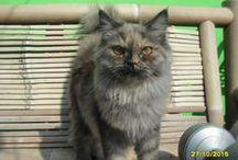 Cat / MY Pet