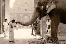 Elephants / by Chris