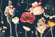 Flower Fetish___The Green Gallery