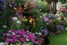 Beautiful Gardens. / 10 pin per day limit! Thank You for following me :-) / by Joke